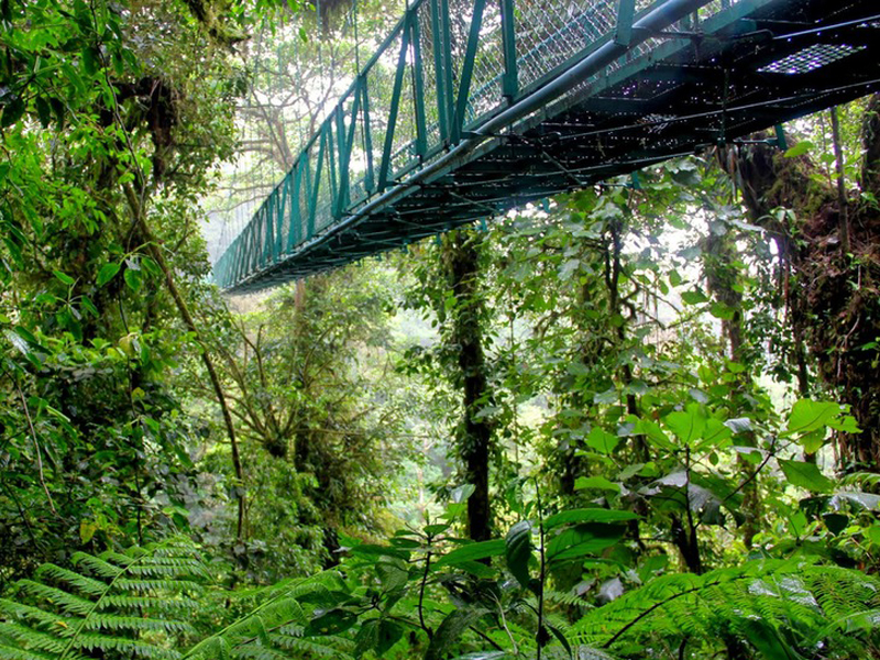 Highlights Costa Rica Monteverde
