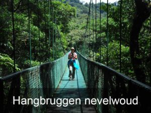 hangbruggen-nevelwoud