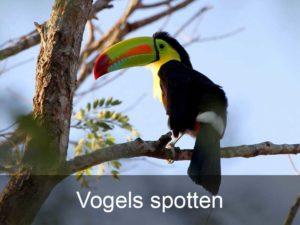 vogels-spotten