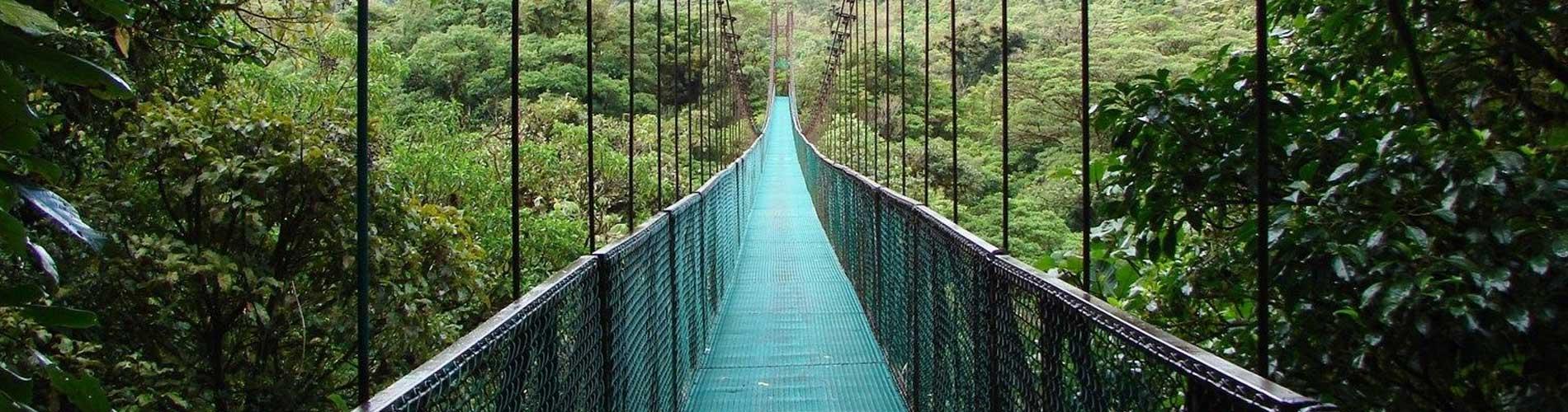 Hanging Bridges cloud forest