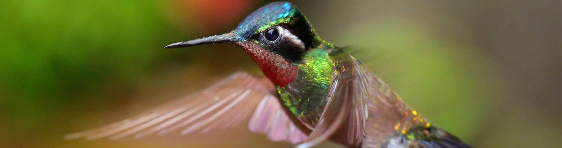 Kolibrietuin