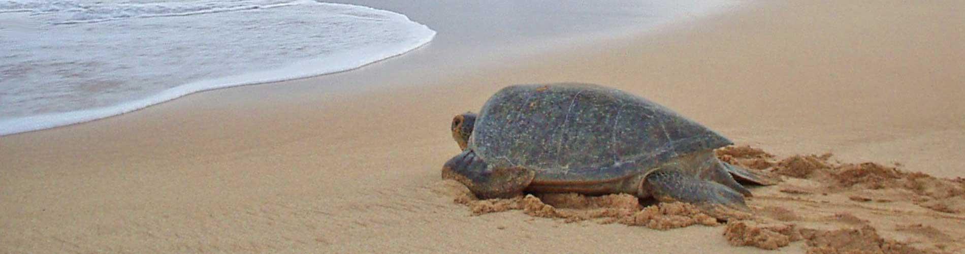 Schildpaddentour